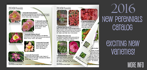 New Perennials for 2016